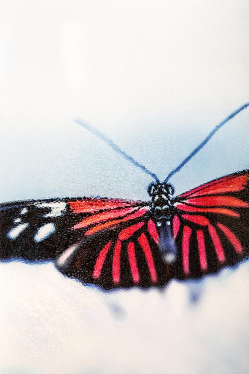 Schmetterling_miss-snapshot